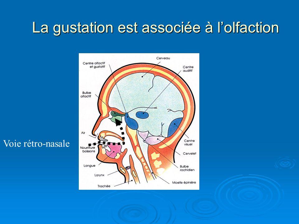 La gustation est associée à lolfaction Voie rétro-nasale