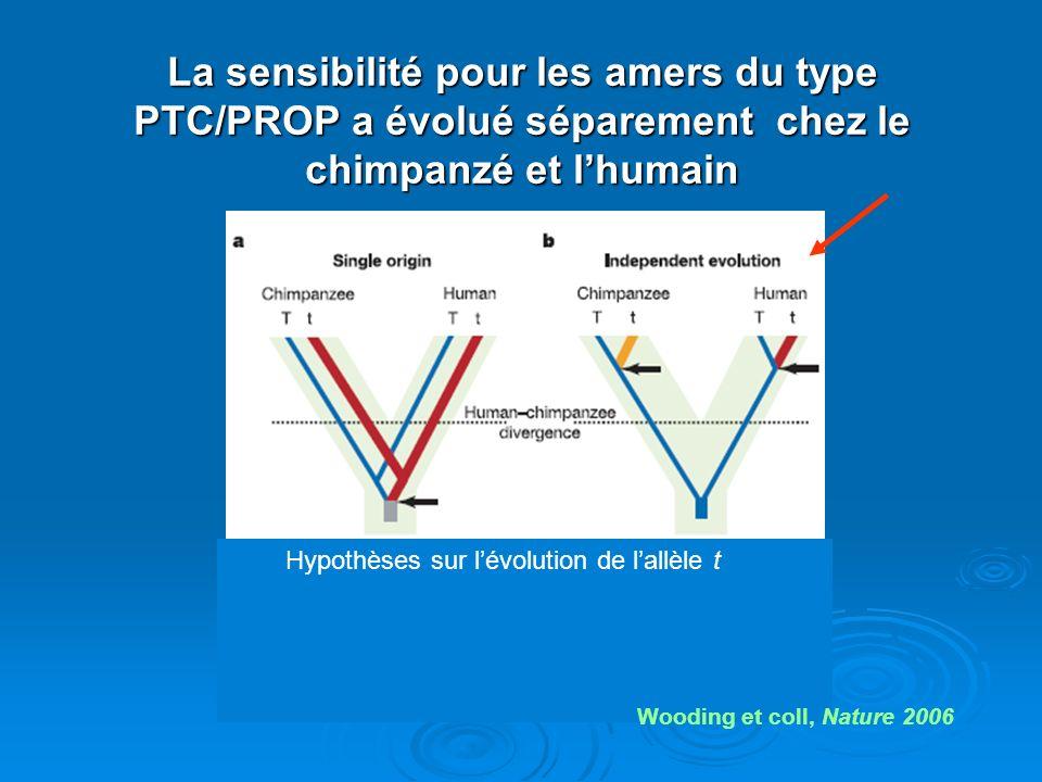 La sensibilité pour les amers du type PTC/PROP a évolué séparement chez le chimpanzé et lhumain Hypothèses sur lévolution de lallèle t Wooding et coll