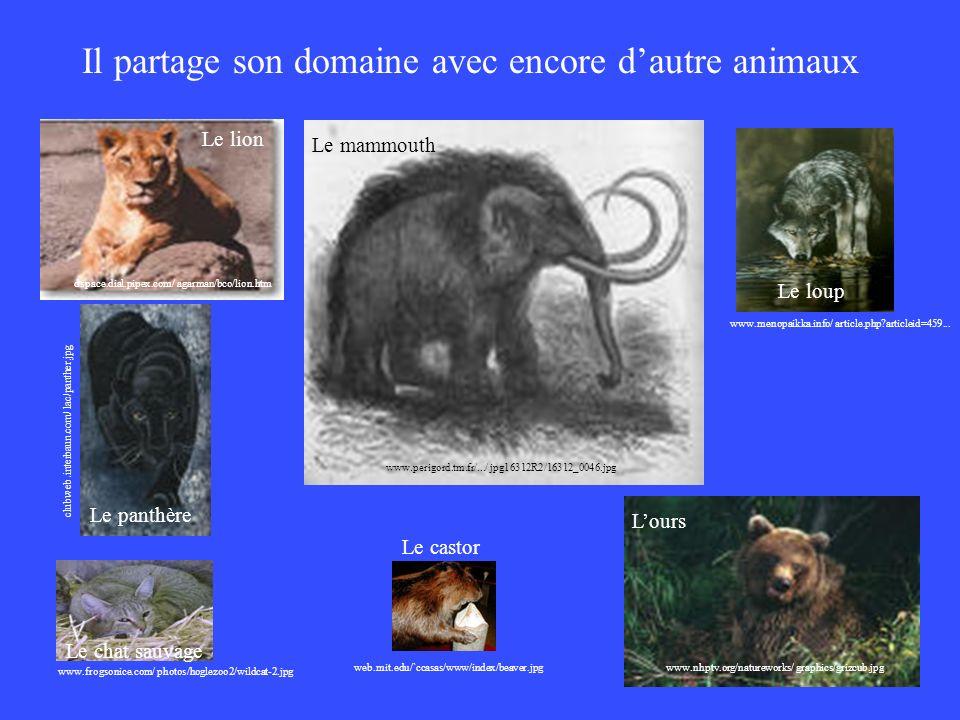 Il partage son domaine avec encore dautre animaux www.perigord.tm.fr/.../ jpg16312R2/16312_0046.jpg Le mammouth www.menopaikka.info/ article.php?artic