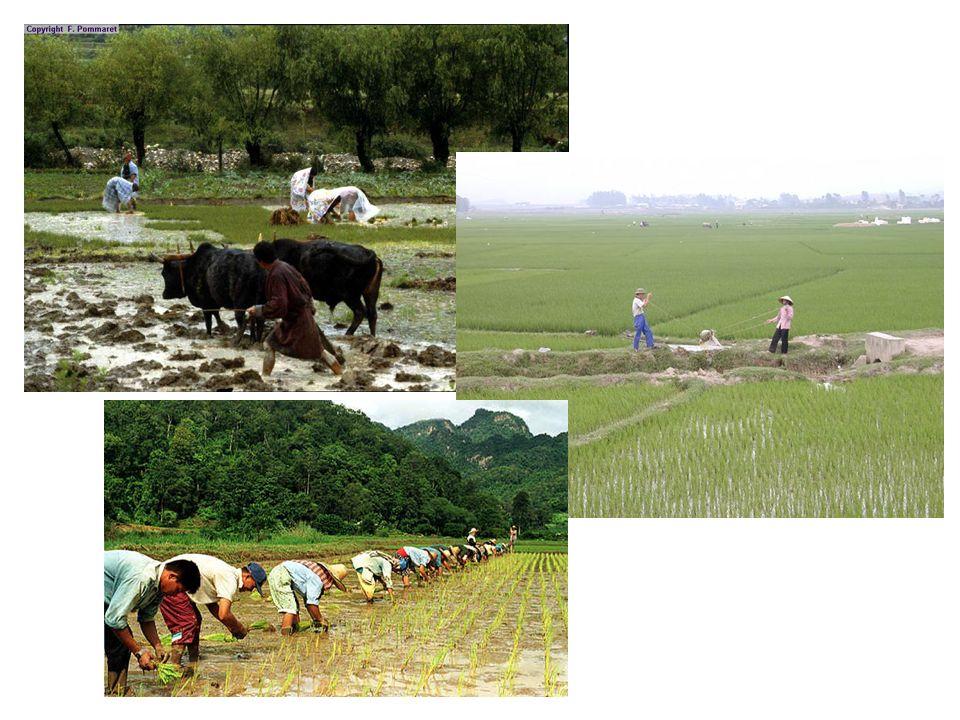 Pourquoi autant dhabitants dans des régions très inondées tous les ans ? Parce quils ont adapté leurs activités au climat en inventant : la rizicultur