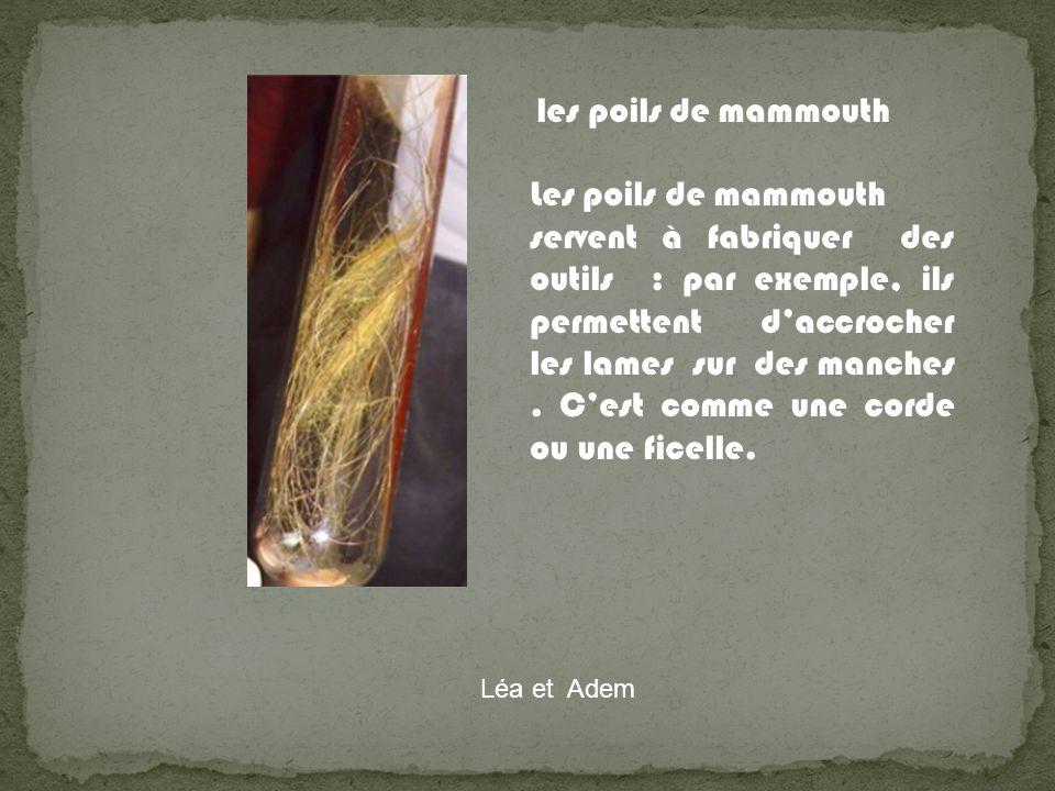 les poils de mammouth Les poils de mammouth servent à fabriquer des outils : par exemple, ils permettent daccrocher les lames sur des manches. Cest co
