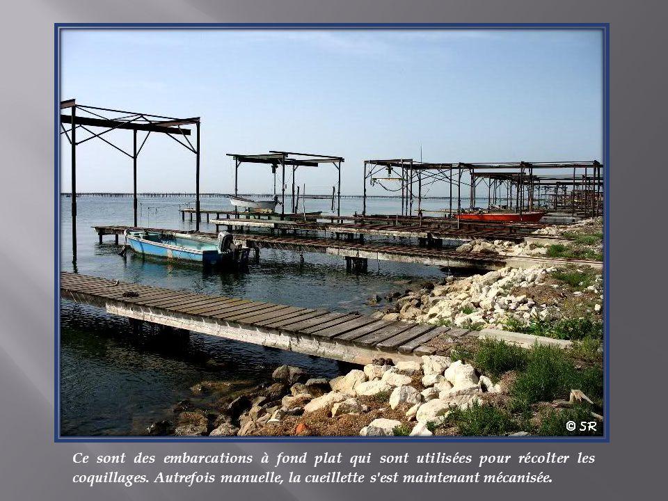 Ce sont des embarcations à fond plat qui sont utilisées pour récolter les coquillages.