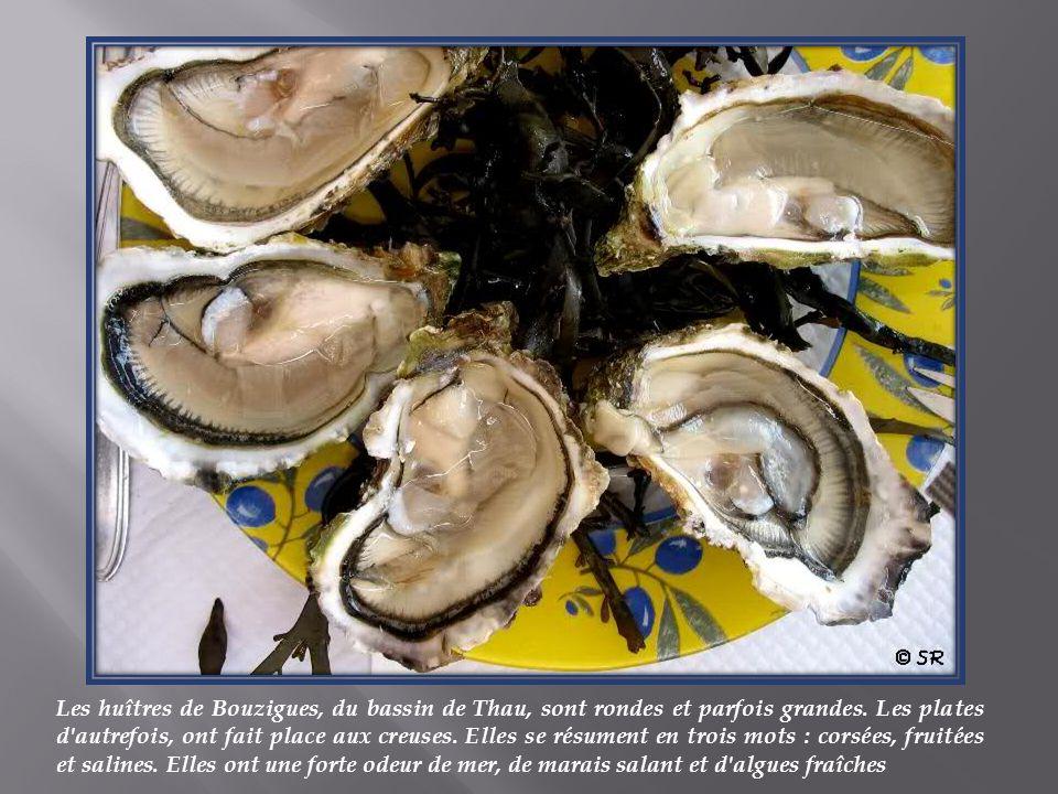 Les huîtres de Bouzigues, du bassin de Thau, sont rondes et parfois grandes.