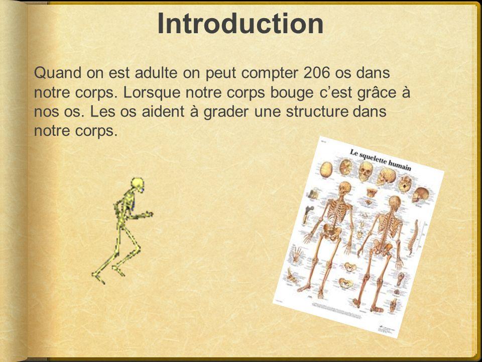 Introduction Quand on est adulte on peut compter 206 os dans notre corps. Lorsque notre corps bouge cest grâce à nos os. Les os aident à grader une st