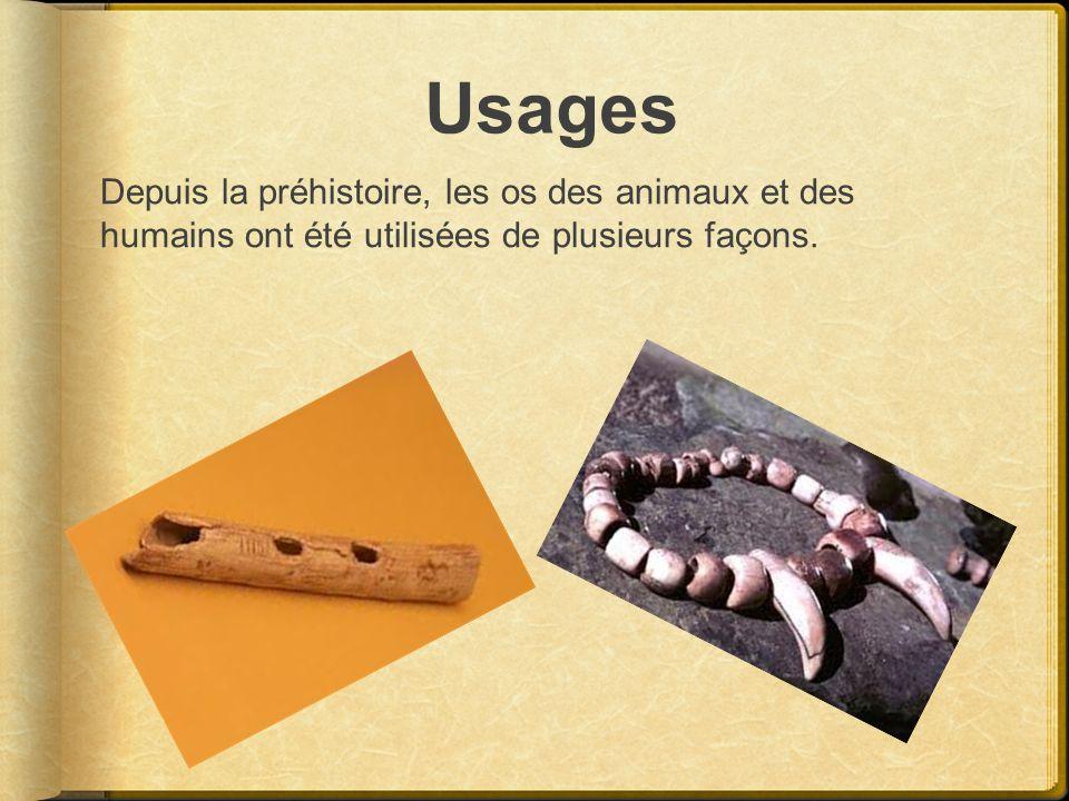 Usages Depuis la préhistoire, les os des animaux et des humains ont été utilisées de plusieurs façons.