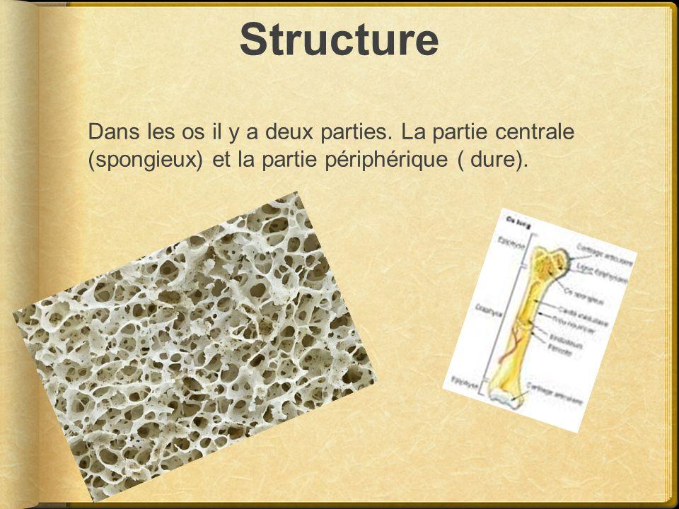 Structure Dans les os il y a deux parties. La partie centrale (spongieux) et la partie périphérique ( dure).
