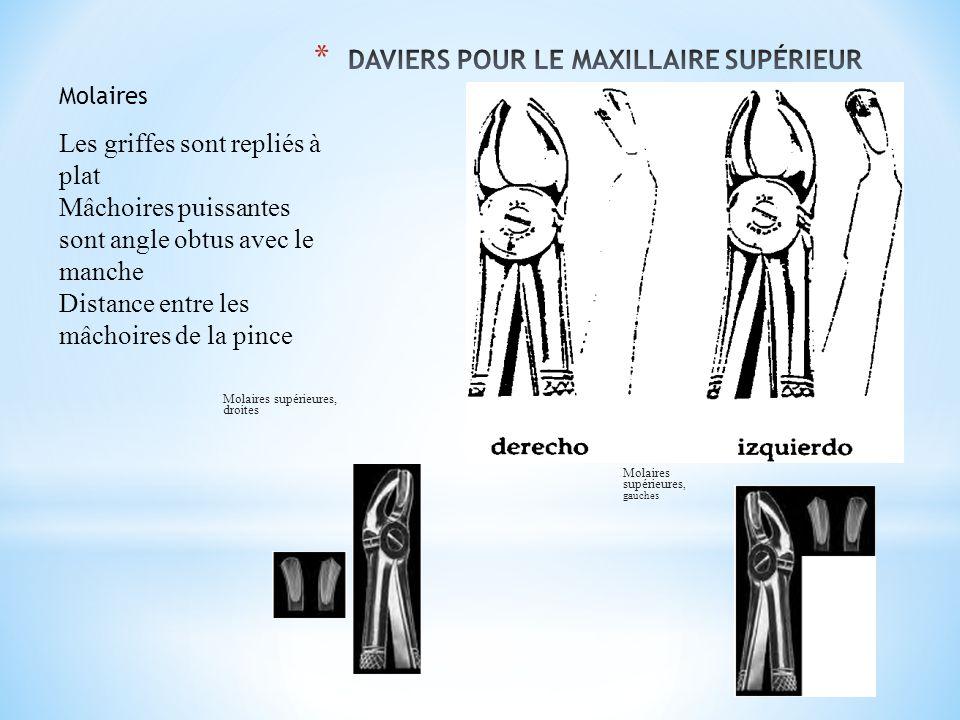 Molaires Les griffes sont repliés à plat Mâchoires puissantes sont angle obtus avec le manche Distance entre les mâchoires de la pince Molaires supérieures, droites Molaires supérieures, gauches