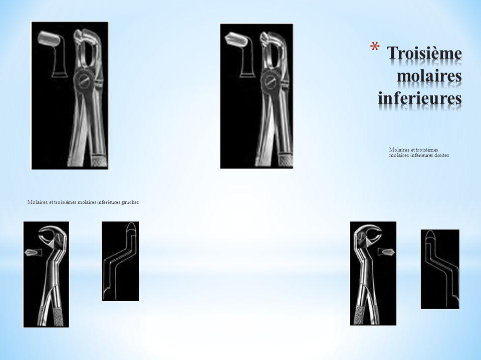 Molaires et troisiémes molaires inferieures gauches Molaires et troisiémes molaires inferieures droites