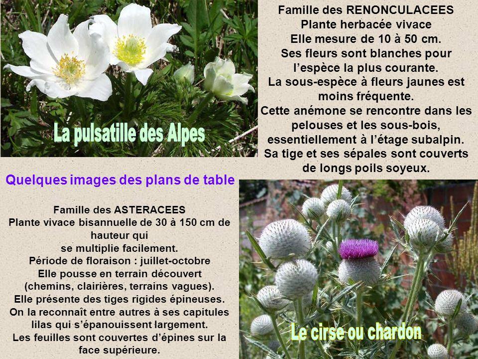 Famille des RENONCULACEES Plante herbacée vivace Elle mesure de 10 à 50 cm.