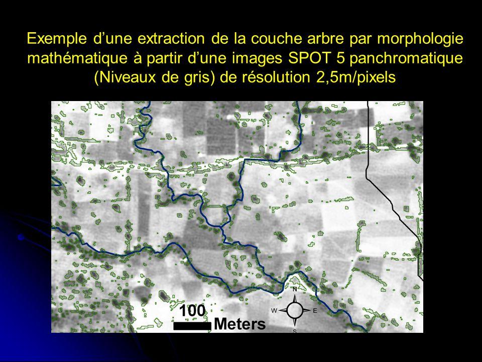 Exemple dune extraction de la couche arbre par morphologie mathématique à partir dune images SPOT 5 panchromatique (Niveaux de gris) de résolution 2,5