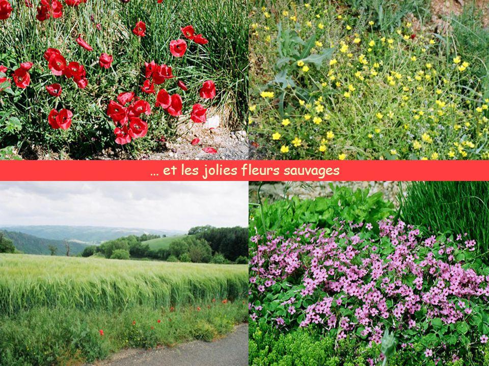 La nature et les champs merveilleux