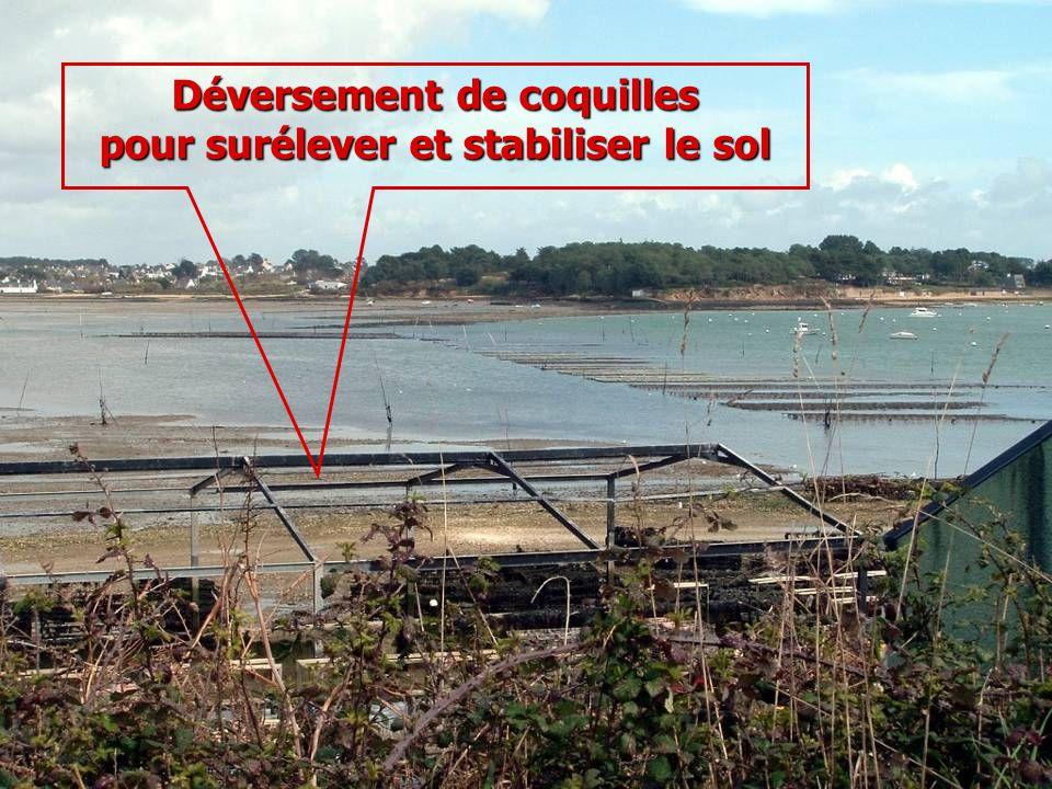 Déversement de coquilles pour surélever et stabiliser le sol