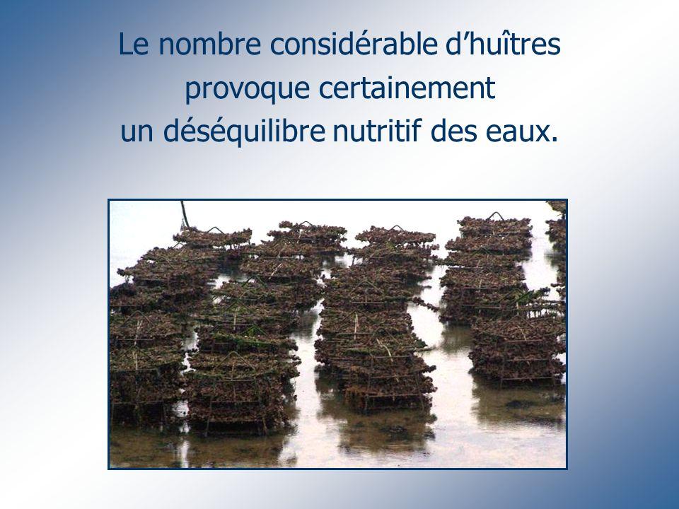 Le nombre considérable dhuîtres provoque certainement un déséquilibre nutritif des eaux.