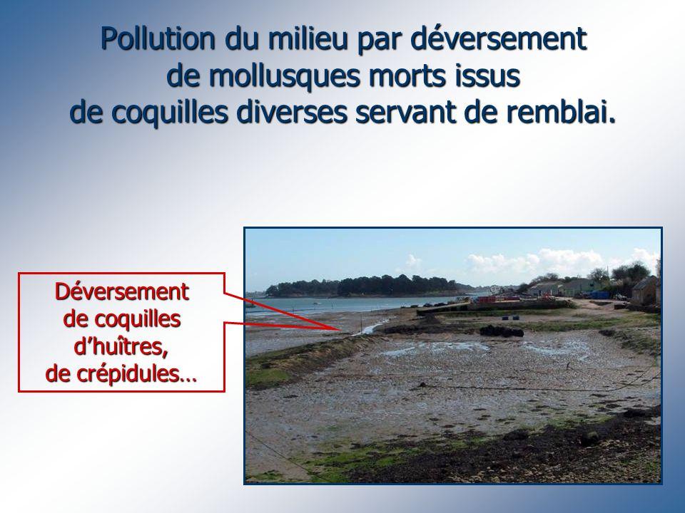 Pollution du milieu par déversement de mollusques morts issus de coquilles diverses servant de remblai. Déversement de coquilles dhuîtres, de crépidul