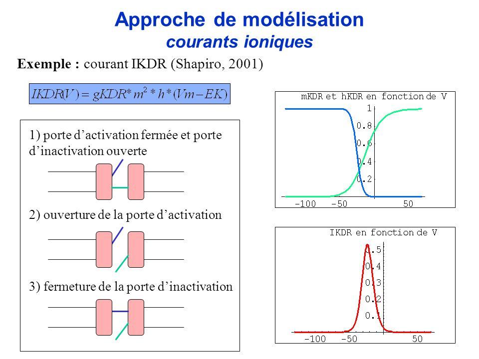 Exemple : courant IKDR (Shapiro, 2001) 1) porte dactivation fermée et porte dinactivation ouverte 2) ouverture de la porte dactivation 3) fermeture de