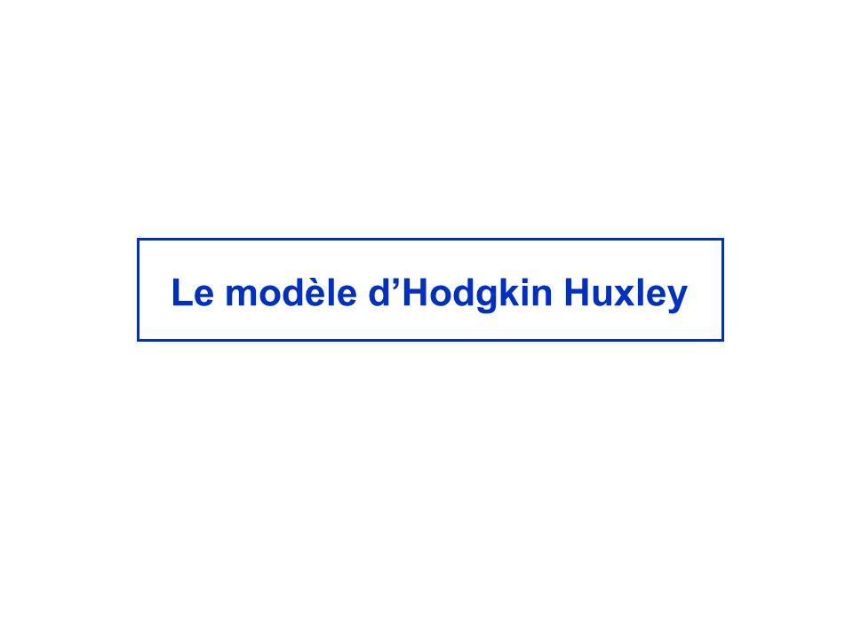 Le modèle dHodgkin Huxley