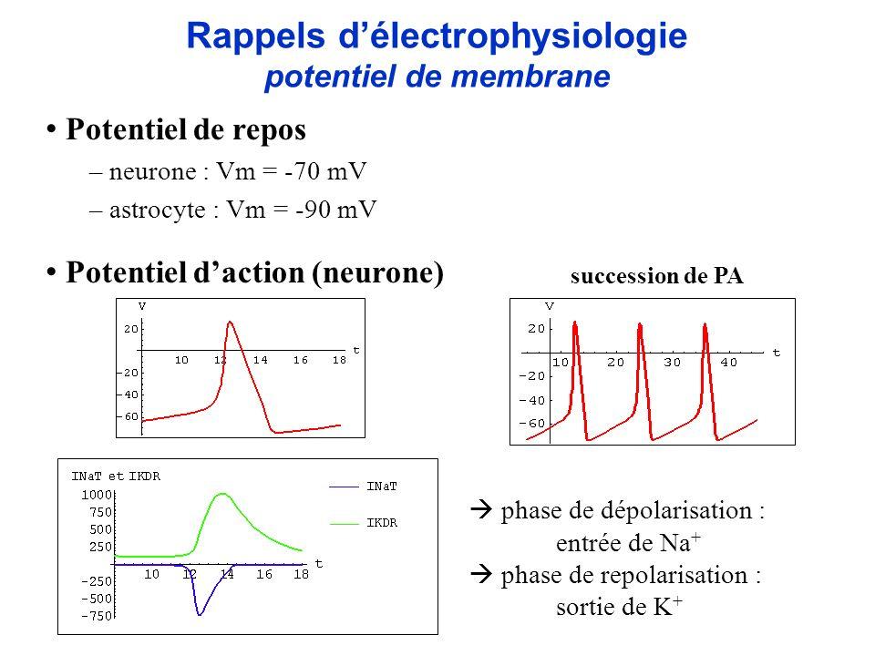 Rappels délectrophysiologie potentiel de membrane Potentiel de repos – neurone : Vm = -70 mV – astrocyte : Vm = -90 mV Potentiel daction (neurone) suc