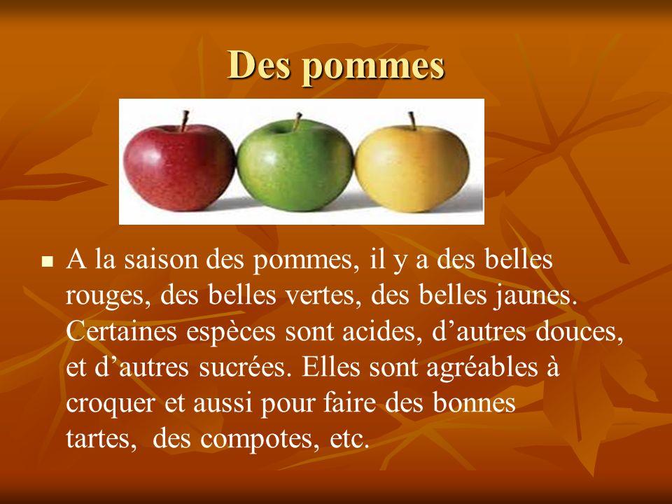 Des pommes A la saison des pommes, il y a des belles rouges, des belles vertes, des belles jaunes. Certaines espèces sont acides, dautres douces, et d