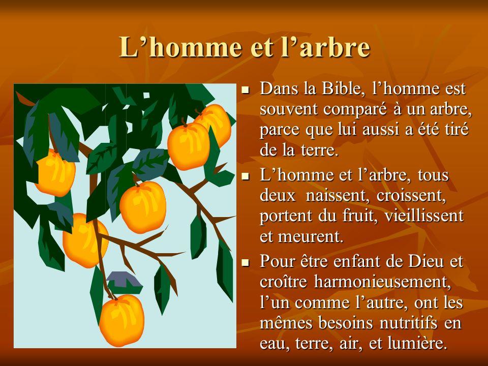 Lhomme et larbre Dans la Bible, lhomme est souvent comparé à un arbre, parce que lui aussi a été tiré de la terre. Dans la Bible, lhomme est souvent c