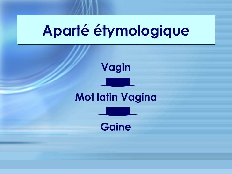 Vagin Mot latin Vagina Gaine