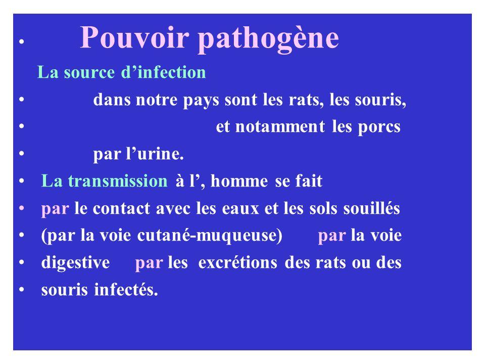 Pouvoir pathogène La source dinfection dans notre pays sont les rats, les souris, et notamment les porcs par lurine. La transmission à l, homme se fai
