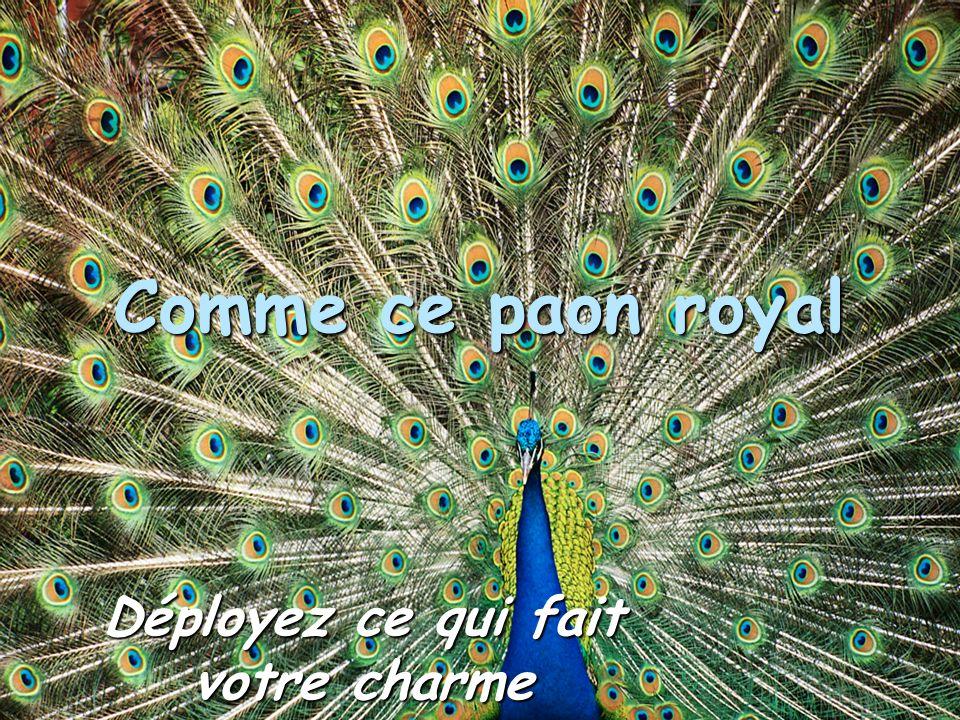 Comme ce paon royal Déployez ce qui fait votre charme