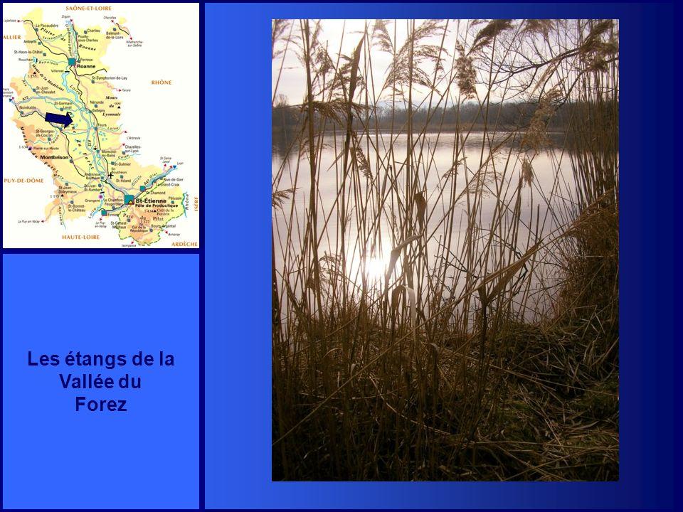 POUILLY lès FEURS Lentrée du Prieuré