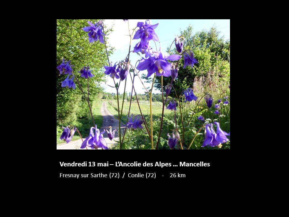 Vendredi 13 mai – LAncolie des Alpes … Mancelles Fresnay sur Sarthe (72) / Conlie (72) - 26 km