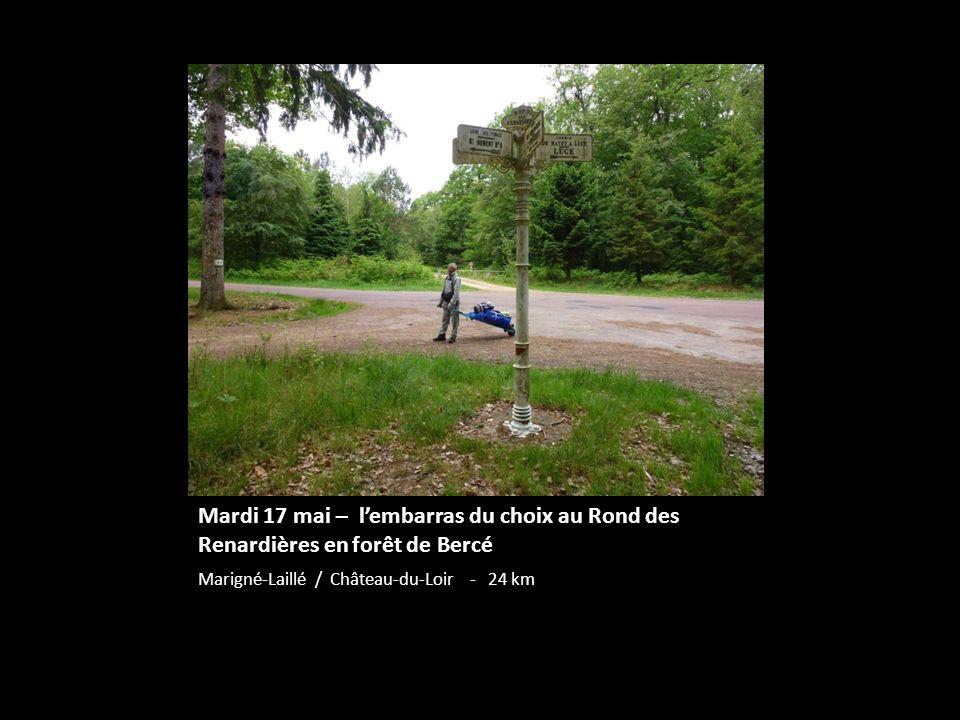 Mardi 17 mai – lembarras du choix au Rond des Renardières en forêt de Bercé Marigné-Laillé / Château-du-Loir - 24 km
