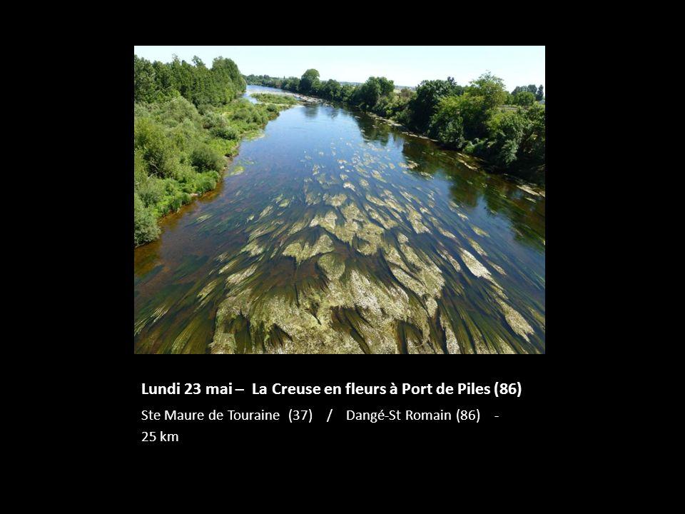 Lundi 23 mai – La Creuse en fleurs à Port de Piles (86) Ste Maure de Touraine (37) / Dangé-St Romain (86) - 25 km