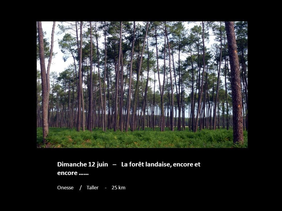 Dimanche 12 juin – La forêt landaise, encore et encore …… Onesse / Taller - 25 km