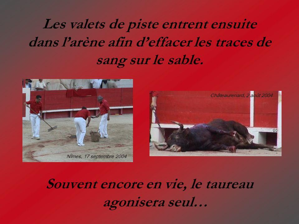 Souvent encore en vie, le taureau agonisera seul… Les valets de piste entrent ensuite dans larène afin deffacer les traces de sang sur le sable. Nîmes