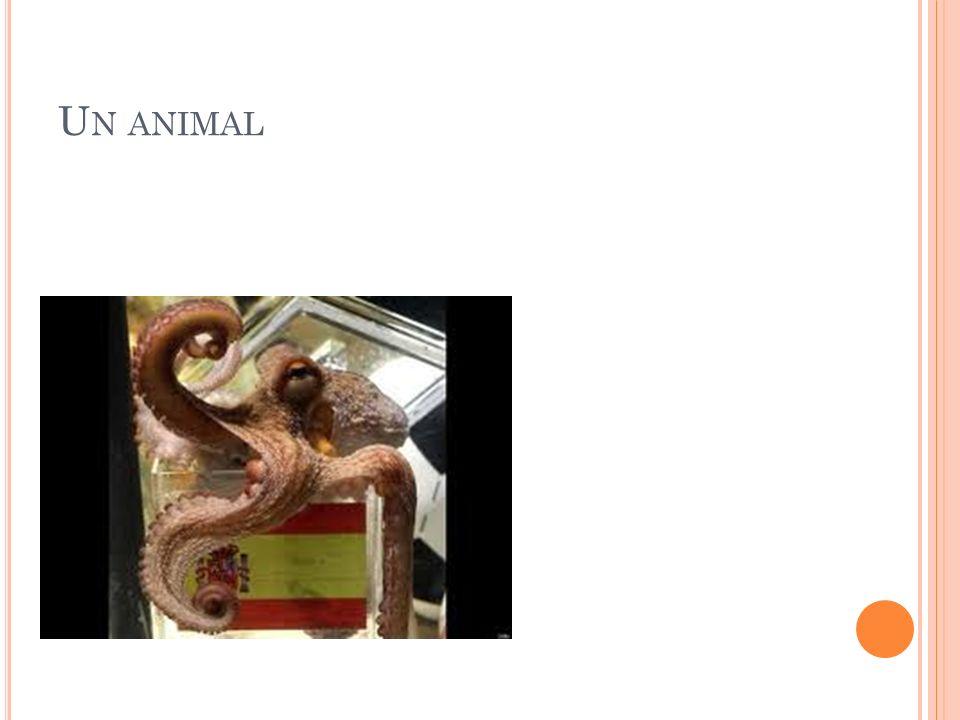 U N ANIMAL