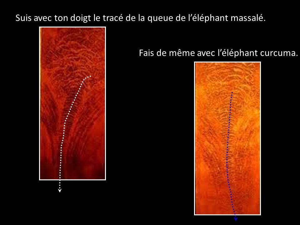 Suis avec ton doigt le tracé de la queue de léléphant massalé. Fais de même avec léléphant curcuma.