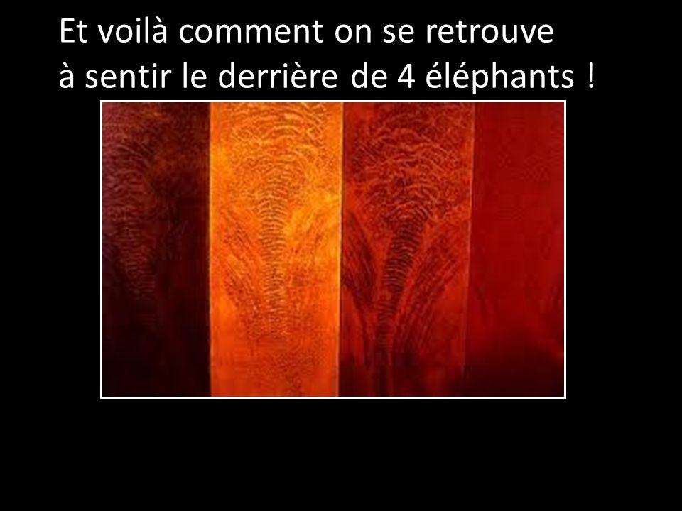 Et voilà comment on se retrouve à sentir le derrière de 4 éléphants !
