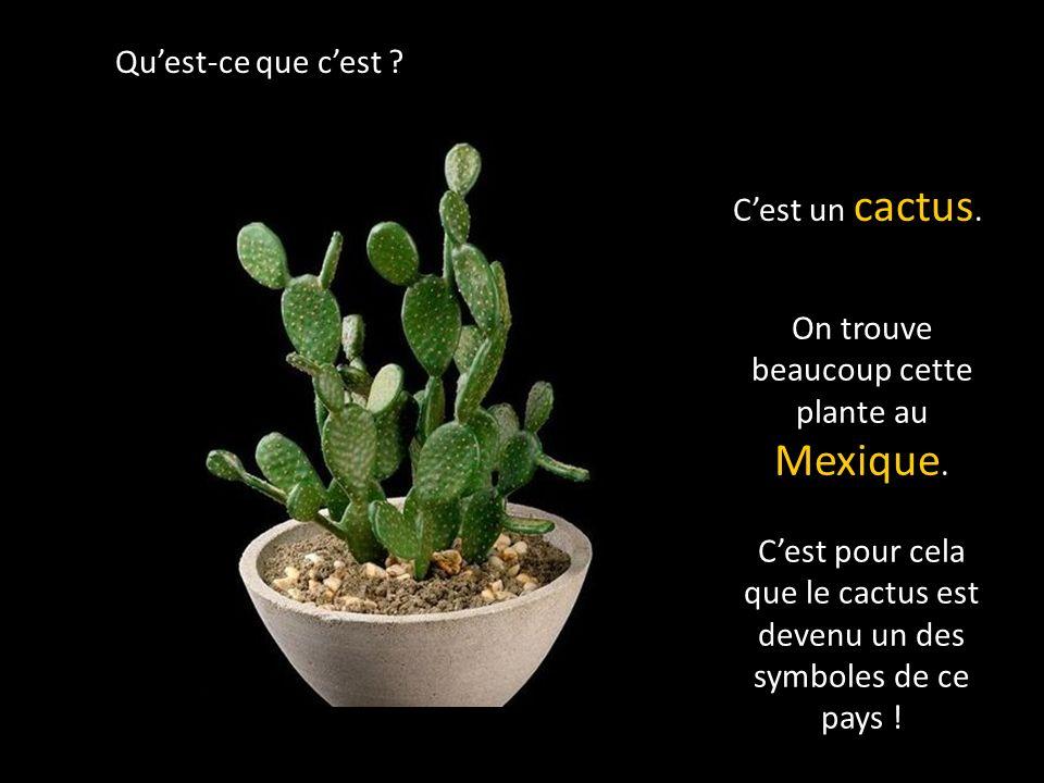 Quest-ce que cest .Cest un cactus. On trouve beaucoup cette plante au Mexique.