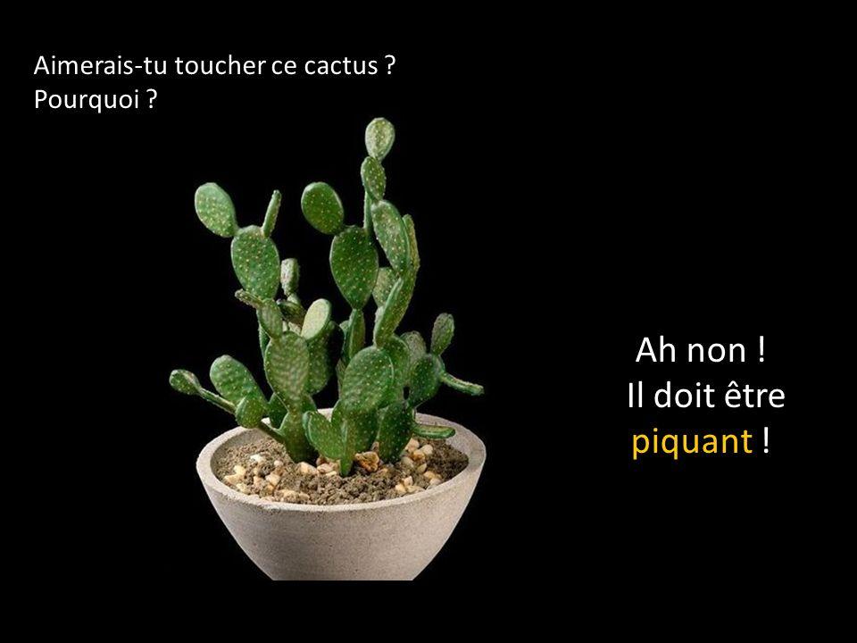 Aimerais-tu toucher ce cactus ? Pourquoi ? Ah non ! Il doit être piquant !