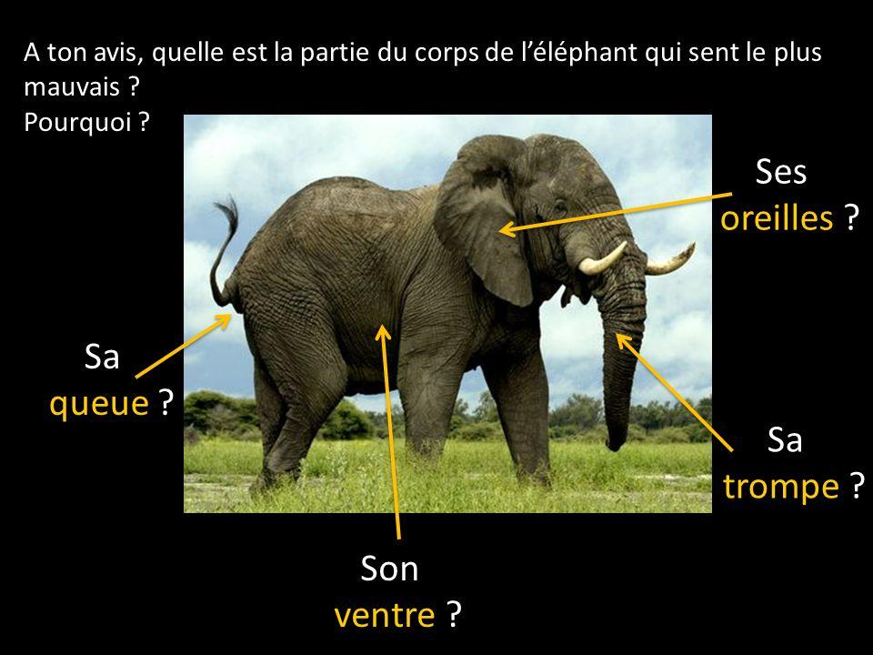 A ton avis, quelle est la partie du corps de léléphant qui sent le plus mauvais .