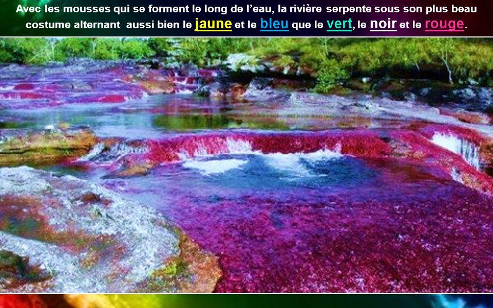 La Caño Cristales est aussi appelée rivière aux cinq couleurs.