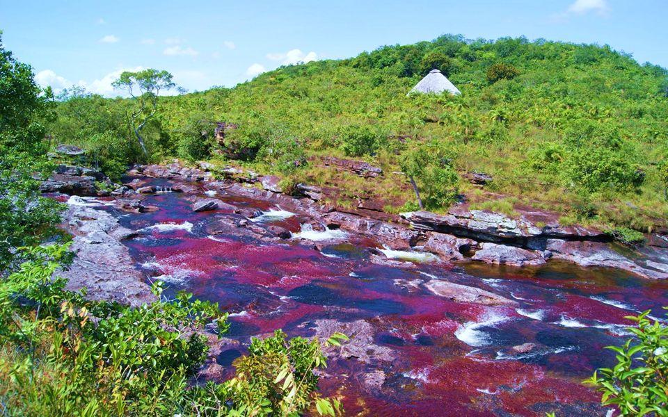 La rivière Caño Cristales coule sur moins de 100 kilomètres et offre cascades, puits et retenues d'eau.