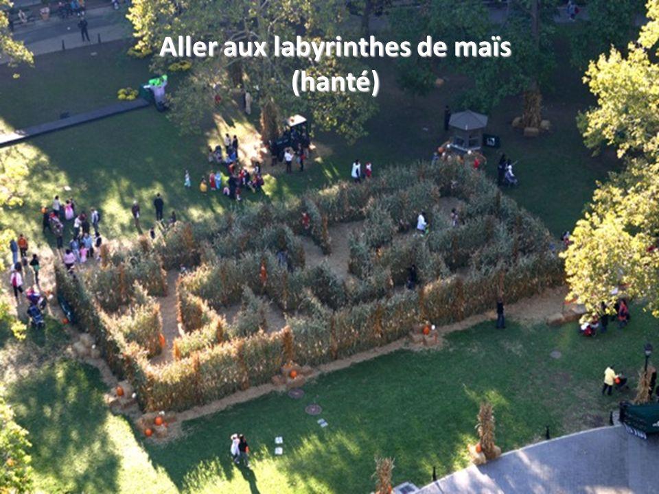 Aller aux labyrinthes de maïs (hanté)