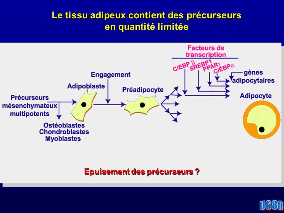 Le tissu adipeux contient des précurseurs en quantité limitée Epuisement des précurseurs ?