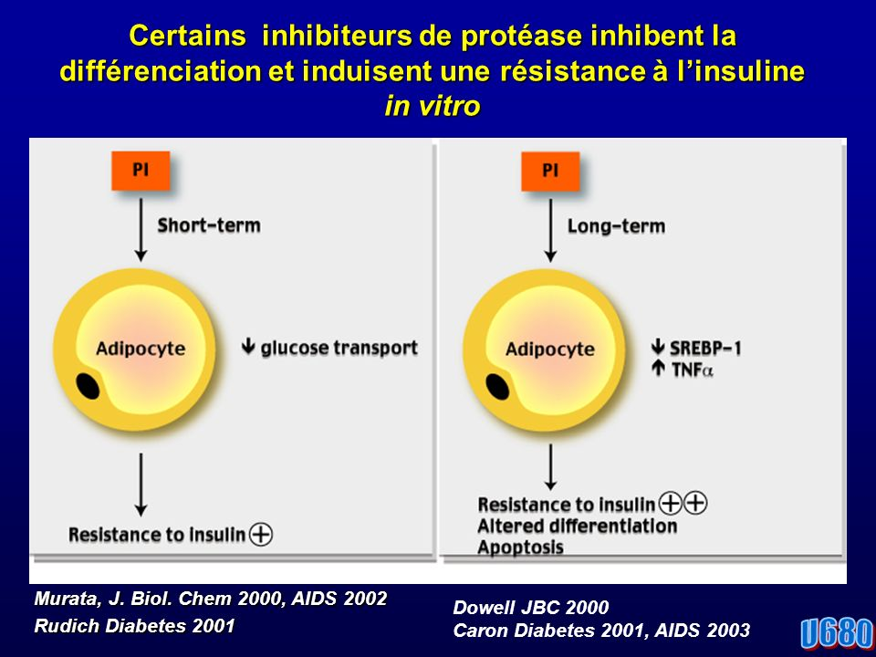 Certains inhibiteurs de protéase inhibent la différenciation et induisent une résistance à linsuline in vitro Murata, J.
