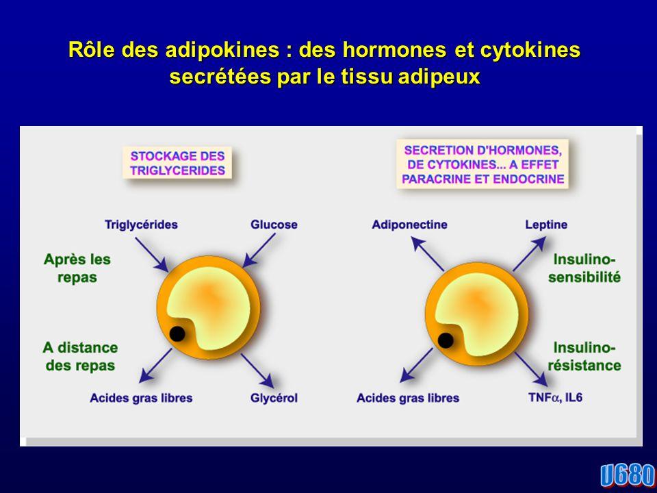 Rôle des adipokines : des hormones et cytokines secrétées par le tissu adipeux