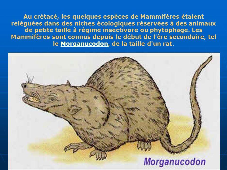 Au crétacé, les quelques espèces de Mammifères étaient reléguées dans des niches écologiques réservées à des animaux de petite taille à régime insecti
