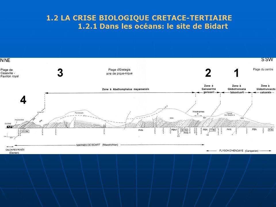 1.2 LA CRISE BIOLOGIQUE CRETACE-TERTIAIRE 1.2.1 Dans les océans: le site de Bidart