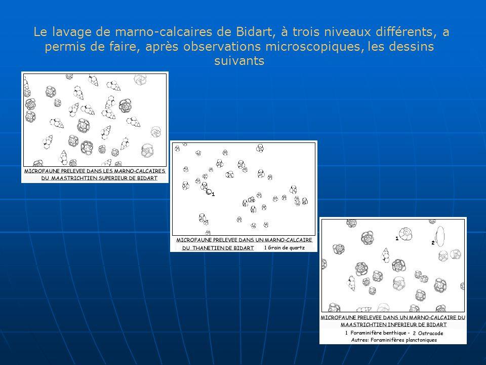 Le lavage de marno-calcaires de Bidart, à trois niveaux différents, a permis de faire, après observations microscopiques, les dessins suivants