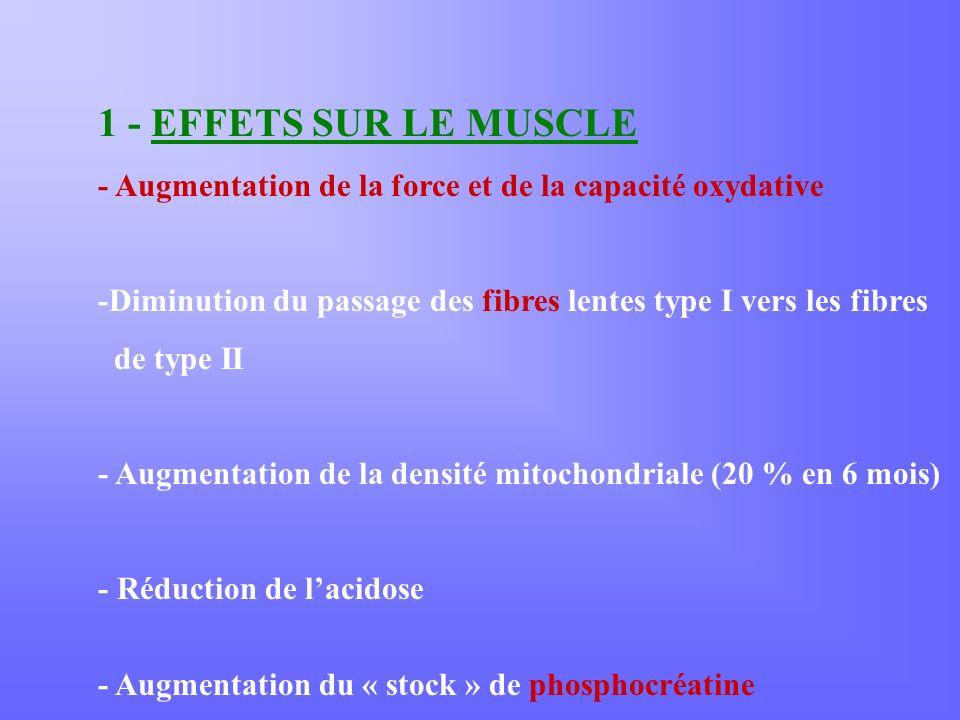 1 - EFFETS SUR LE MUSCLE - Augmentation de la force et de la capacité oxydative -Diminution du passage des fibres lentes type I vers les fibres de type II - Augmentation de la densité mitochondriale (20 % en 6 mois) - Réduction de lacidose - Augmentation du « stock » de phosphocréatine