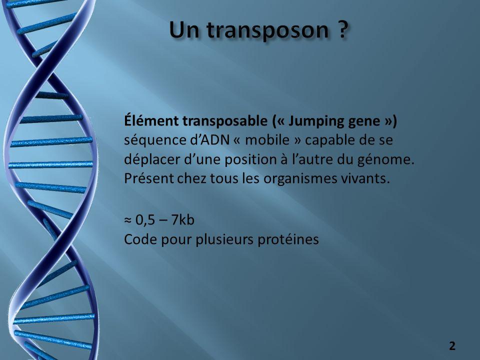 Élément transposable (« Jumping gene ») séquence dADN « mobile » capable de se déplacer dune position à lautre du génome. Présent chez tous les organi
