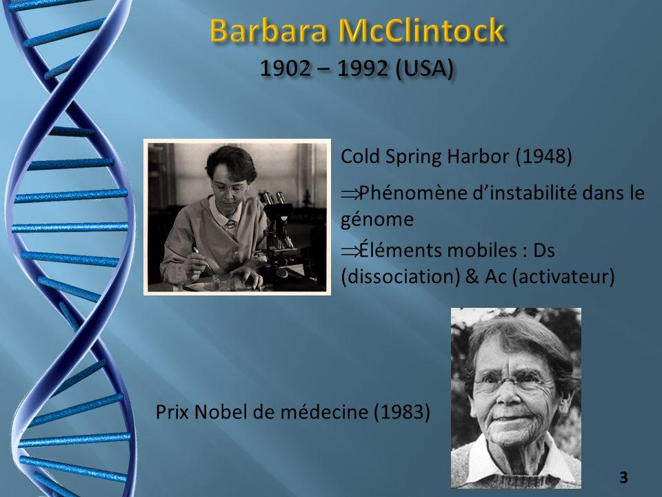3 Cold Spring Harbor (1948) Prix Nobel de médecine (1983) Éléments mobiles : Ds (dissociation) & Ac (activateur) Phénomène dinstabilité dans le génome
